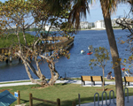 Image of large tree and intracoastal waterway