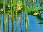 Lake Lilies